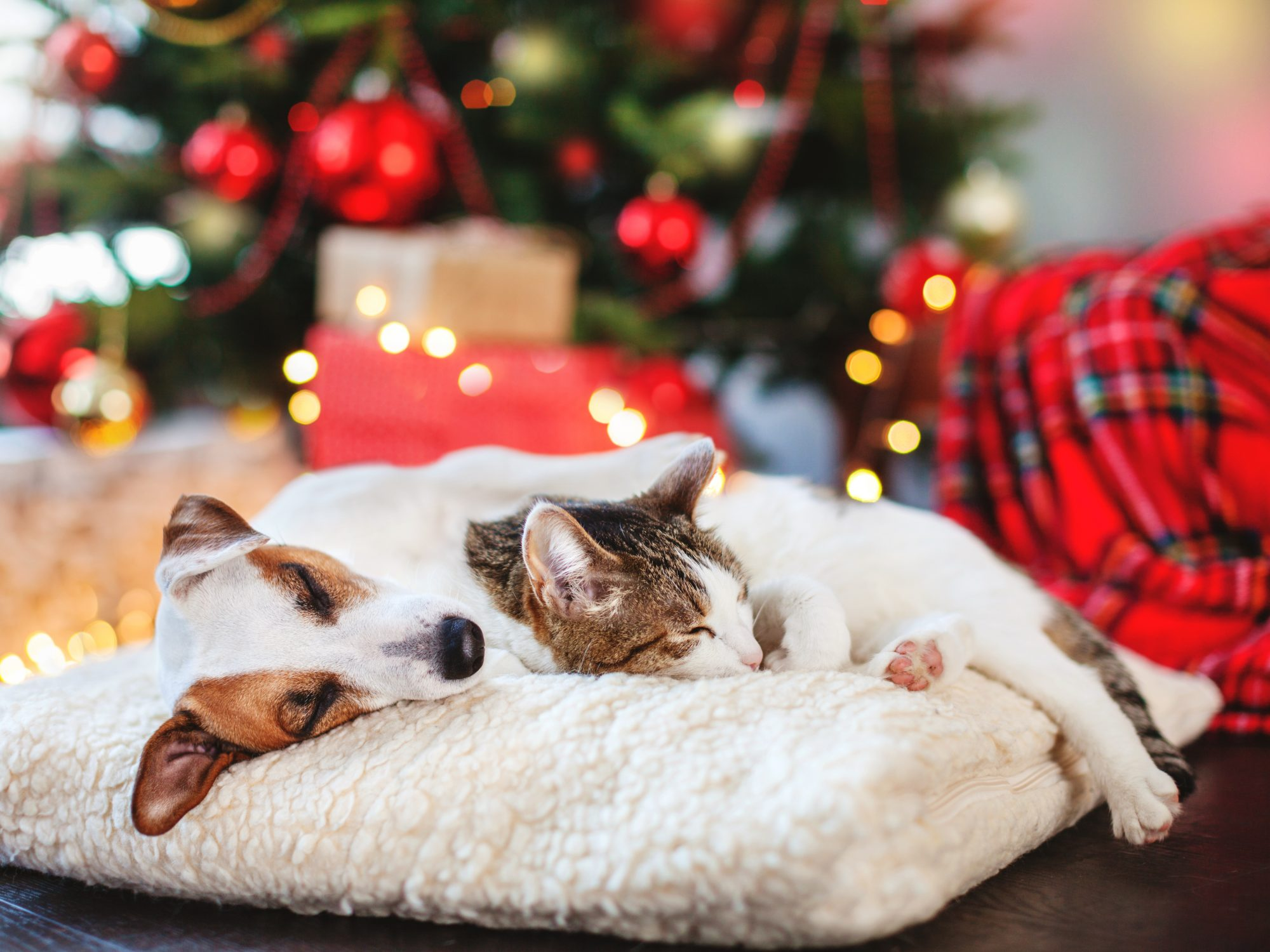 Keeping your pets safe doesn't have to be tricky. Follow Lincolnshire Animal Hospital's tips for a Pet Safe Holiday Season.