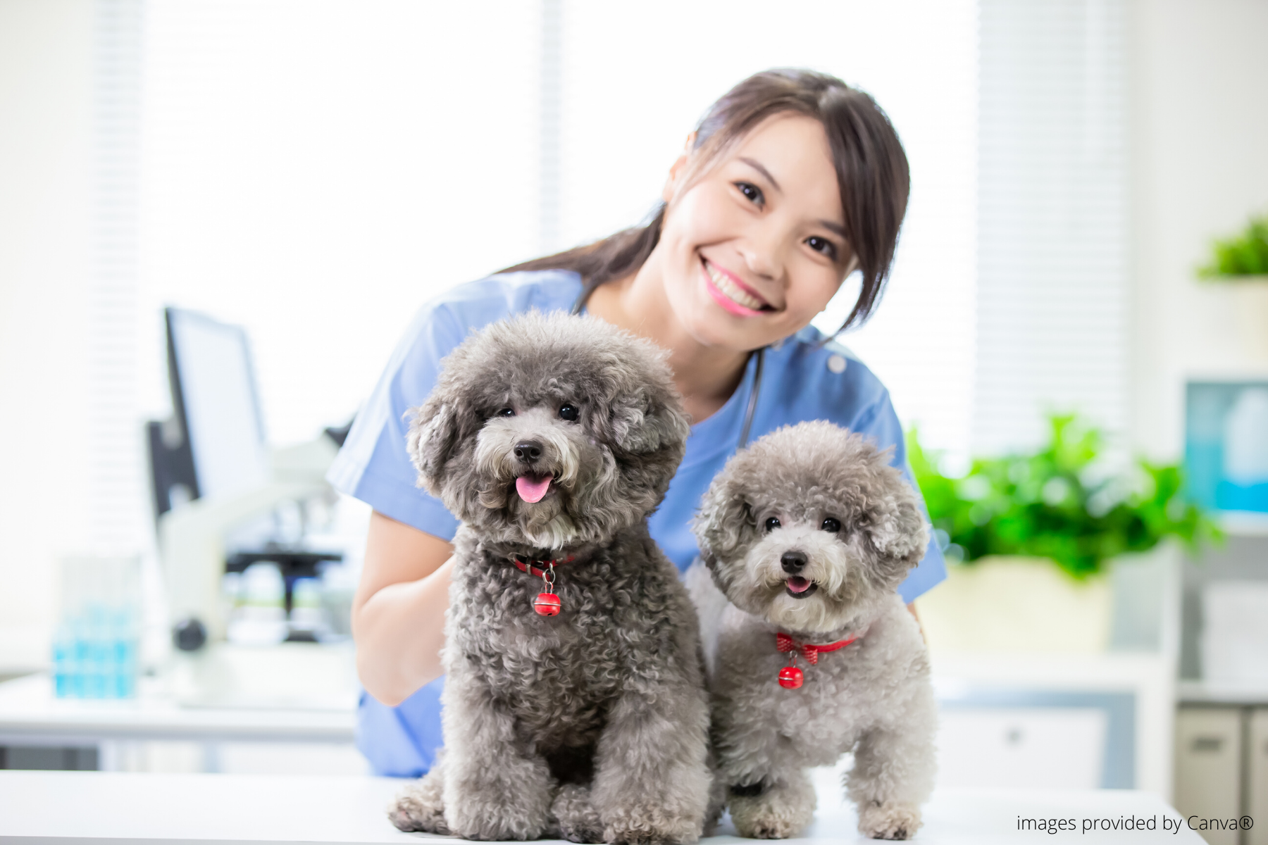 two dogs smiling with a veterinary employee